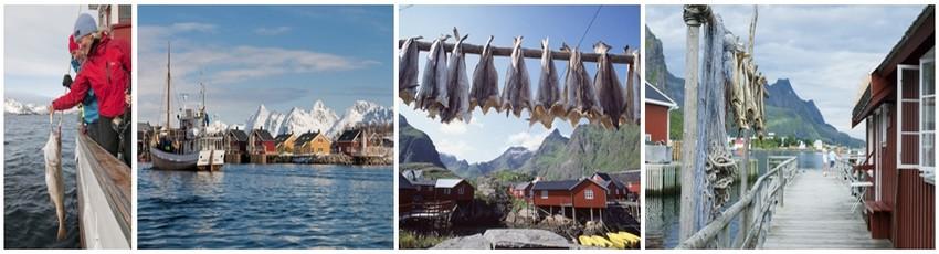 Aujourd'hui encore, les captures de skrei se font à la ligne, au chalut de fond ou au chalut pélagique, à des heures précises, selon des volumes autorisés et rapidement avant que le poisson ne regagne l'océan (Crédit photo Tourism Norway).