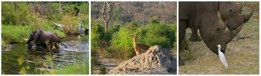 Dans les camps et lodges éparpillés dans les zones sauvages du pays, la nature prend alors une autre dimension.Au coeur de l'Okavango, on se laisse bercer par le souffle du vent dans les papyrus, le clapotis d'une antilope, ou - plus inquiétant ! - le souffle des hippopotames et le grognement lointain d'un lion (Crédit photos Patrick Cros)