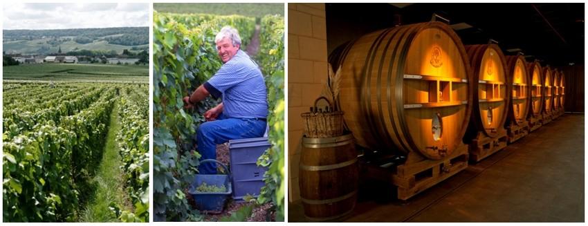 De gauche à droite : Les vignobles du champagne de Telmont ( ©DR); Un vendangeur en plein ouvrage(© Greg Oxley) ; Les foudreries  du champagne de Telmont (© DR)