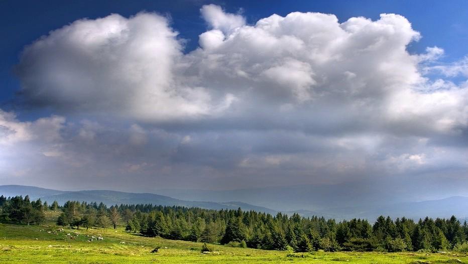 Magnifique paysage vosgien où sur les vastes étendues verdoyantes paissent,tranquilles, les vaches du terroir. (Crédit photo DR)