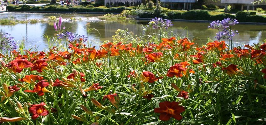 Vue sur les plantes du Parc Terra Botanica dans le Val de Loire Une région où l'horticulture est reine et n'a de rivale que la viticulture et ses nombreuses appellations.