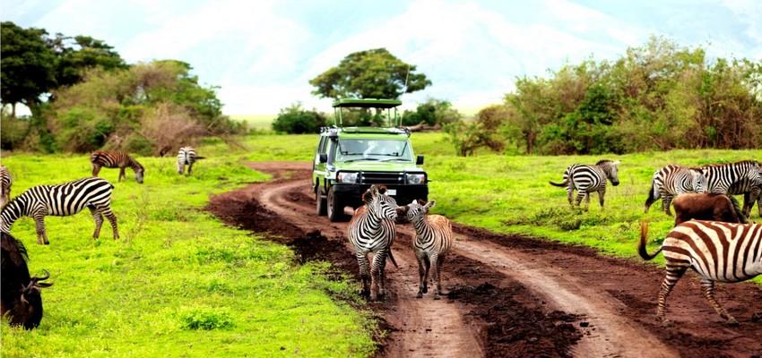 Offre Club Med d'un circuit en Tanzanie avec safari © DR.