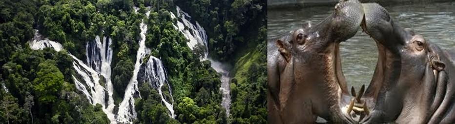 Le parc de Taî, est un paradis pour les amateurs d'écotourisme.  © DR