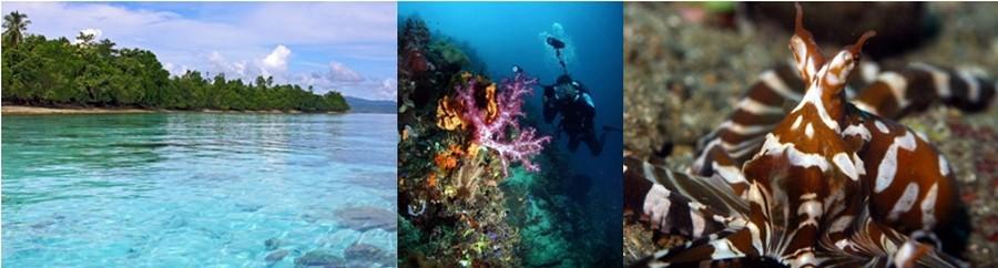 D'exceptionnels paysages équatoriaux abritent une faune et une flore bien préservées. Les longues plages de sable fin d'Ambon ou Banda, l'île voisine, invitent à jouer les Robinson. © O.T. Indonésia