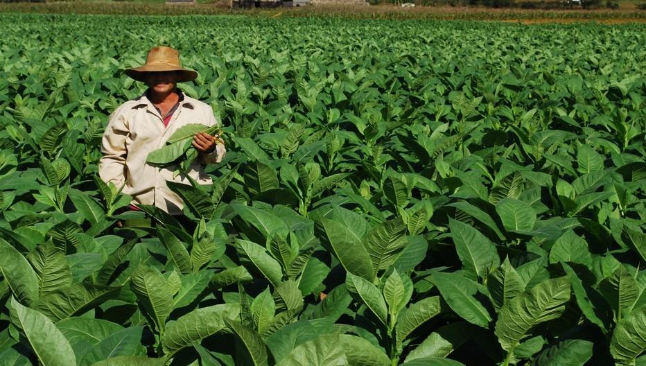 La République Dominicaine, premier pays producteur de cigares au monde; © OT République Dominicaine