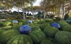 Les jardins d'Etretat – Un jardin de conte de fée