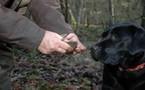 Histoires d'Or :  les truffes de la Haute-Marne