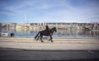 Rijeka, première ville croate capitale européenne de la culture