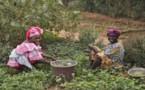 Solidaire : Action contre la Faim renforce ses actions dans tout le Sahel