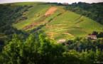 Vallée du Rhône : le vignoble de la Côte-Rôtie une légende bien vivante.