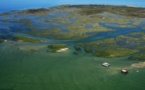 La réserve ornithologique du Teich, une escale paradisiaque pour oiseaux venus d'ailleurs.