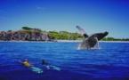Observer les baleines à la Réunion