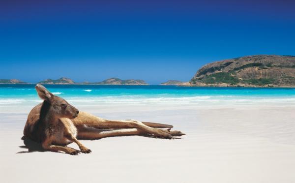 Ecotourisme en Australie : Virée dans les immensités du Nullarbor