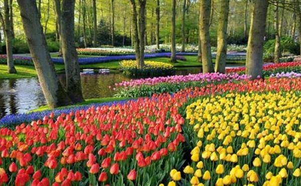 Hollande : La Pologne à l'honneur , pour l'inauguration, le 21 Mars des célèbres jardins de Keukenhoff dans la ville de Lisse aux Pays-Bas.