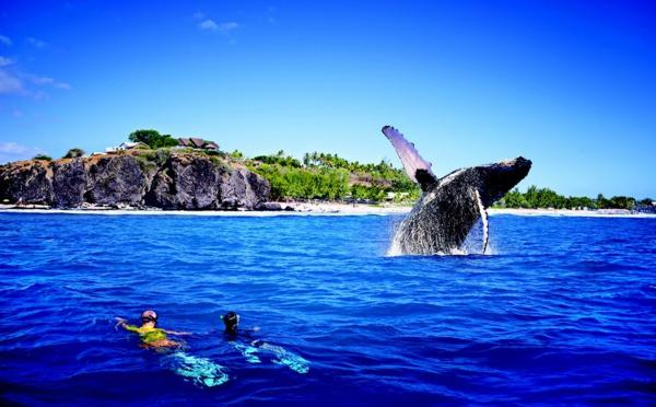 La Réunion - baleines et  tortues le grand retour !