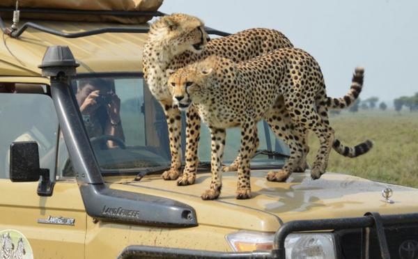 L'inoubliable Tanzanie s'ouvre à nouveau aux touristes