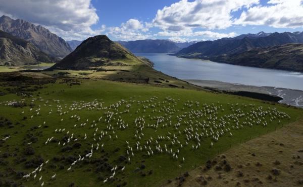 Voyager en lignes : A la recherche des laines précieuses