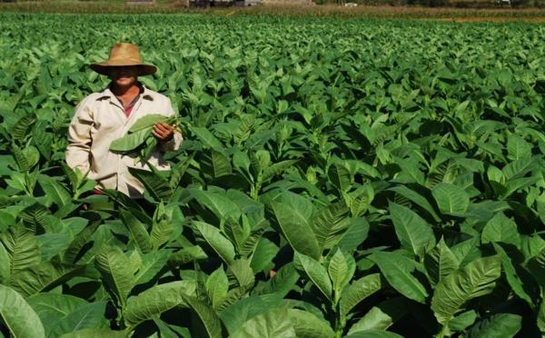 La République Dominicaine, premier pays producteur de cigares au monde